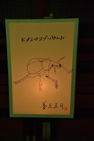 yukaD81_0559.jpg